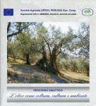 """Percorso didattico: """"L'olivo come coltura, cultura e ambiente"""" (2008)"""